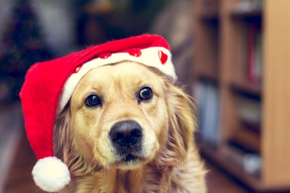 santa-holiday-blog