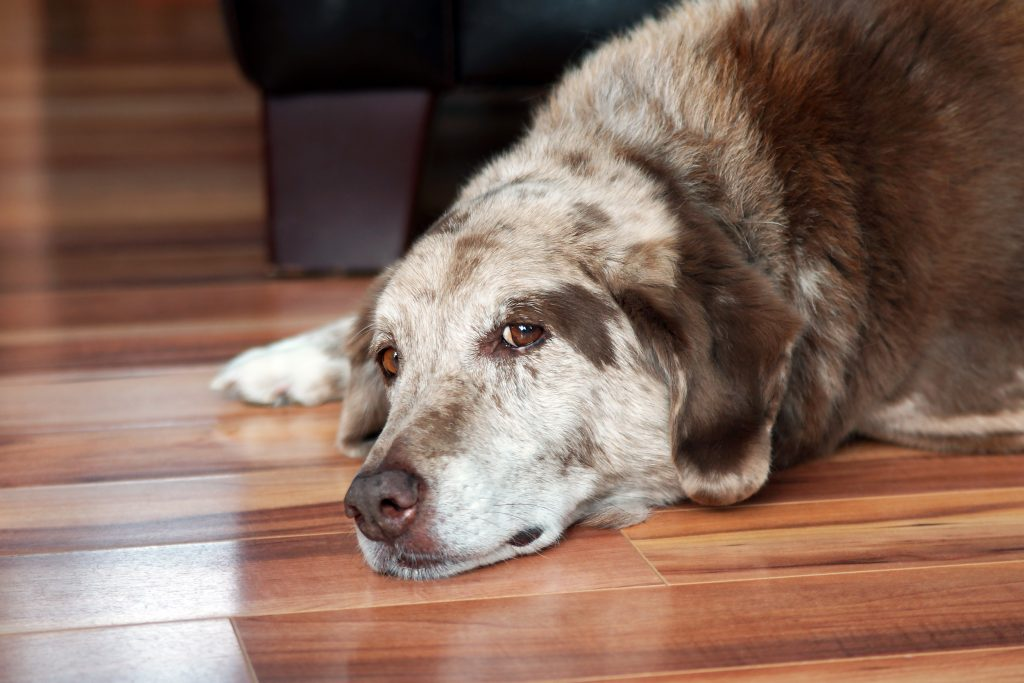 dog-blog-heartworm