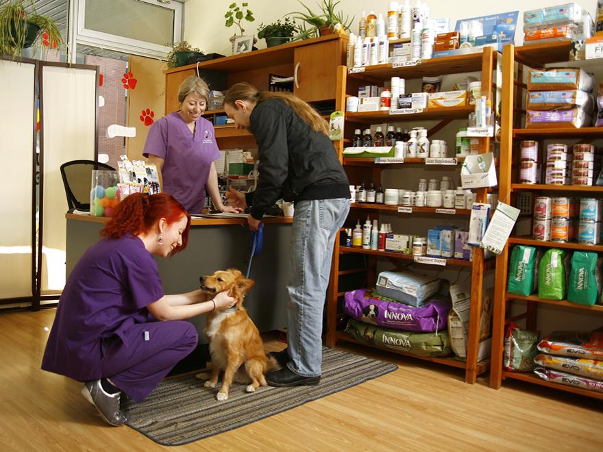 dog-in-vet-client