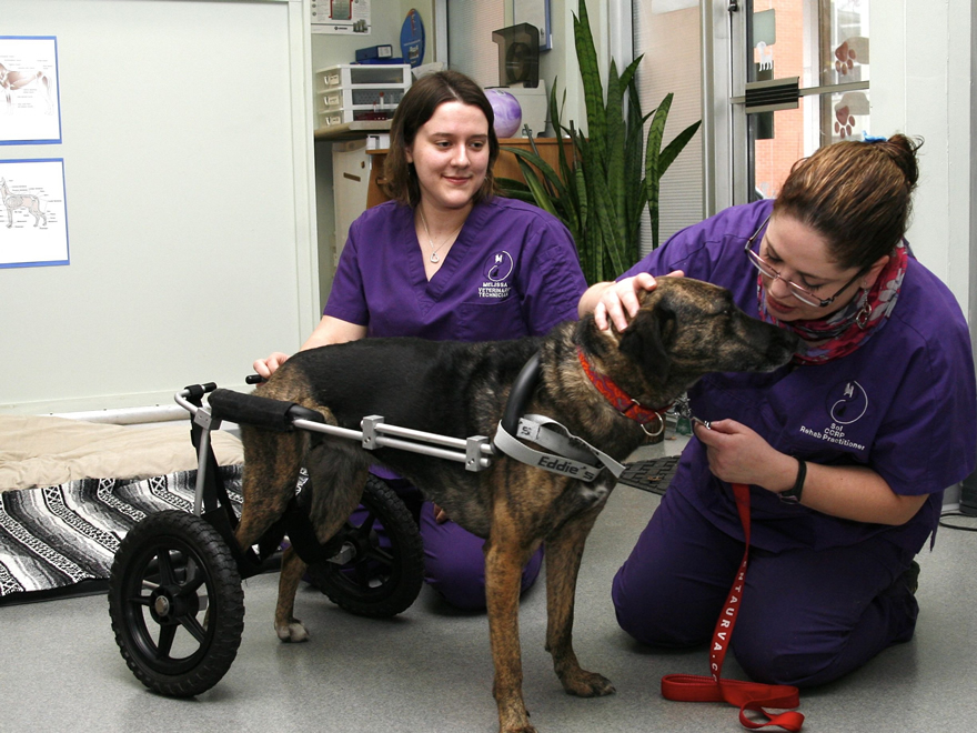 dog-in-rehab-care