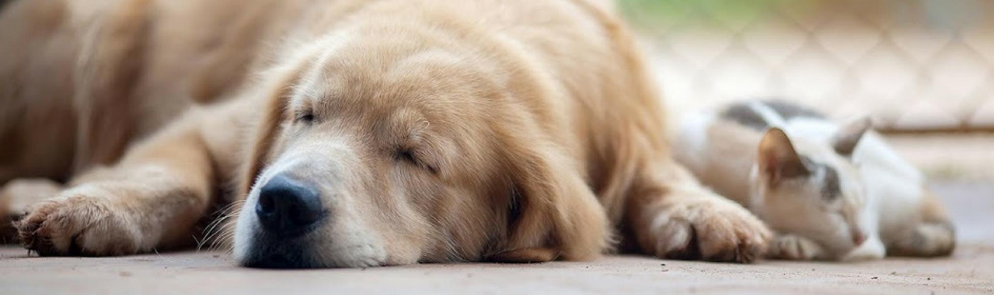 puppy-kitten-services