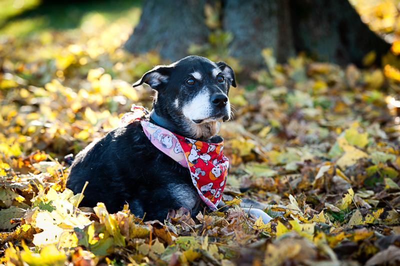 dog-outside-leafs