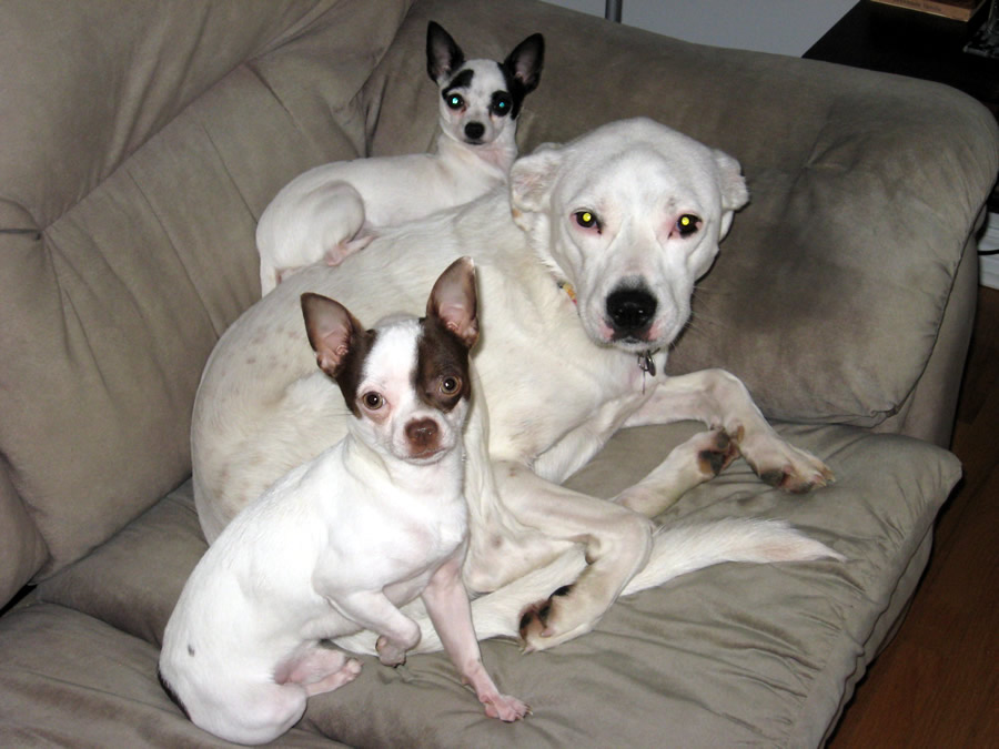 three-dogs-couch