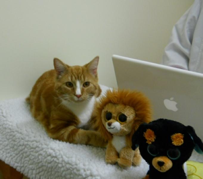 cat-lion-bear