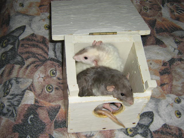 mouses-in-box